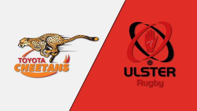 Cheetahs vs. Ulster