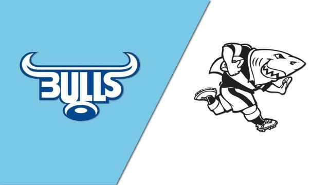 Bulls vs. Sharks