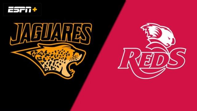 Jaguares vs. Reds (Super Rugby)