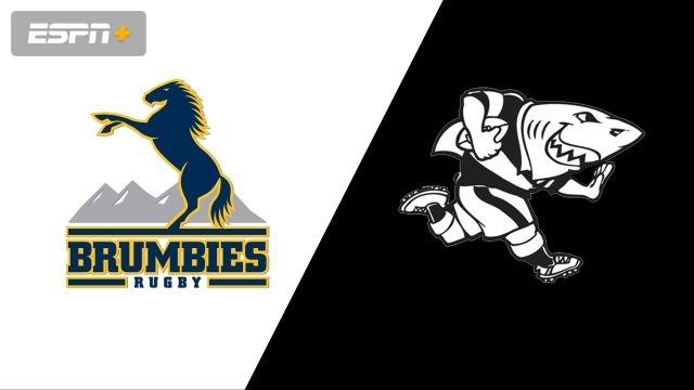 Brumbies vs. Sharks (Quarterfinal) (Super Rugby)